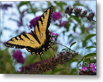 Metal Print featuring the photograph Ready For Take Off by Judy Wolinsky