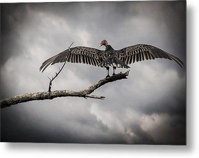 Metal Print featuring the photograph Reaper Awaits by Bradley Clay