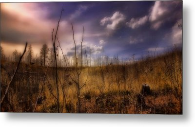 Metal Print featuring the photograph Recovery by Ellen Heaverlo