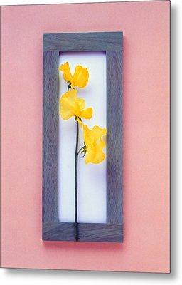 Rectangular Purple Frame With Yellow Metal Print