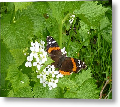Metal Print featuring the photograph Red Admiral Butterfly by Lingfai Leung
