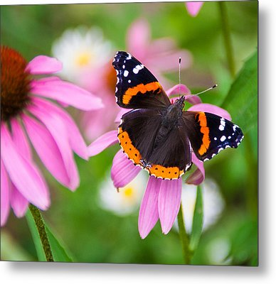 Metal Print featuring the photograph Red Admiral Butterfly by Patti Deters
