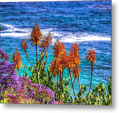 Metal Print featuring the photograph Red Aloe By The Pacific by Jim Carrell