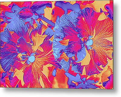 Red And Blue Pansies Pop Art Metal Print by Dora Sofia Caputo Photographic Art and Design