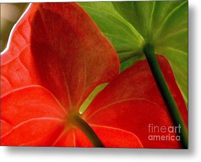 Red And Green Anthurium Metal Print