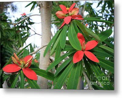 Red And Green Metal Print by Butch Phillips