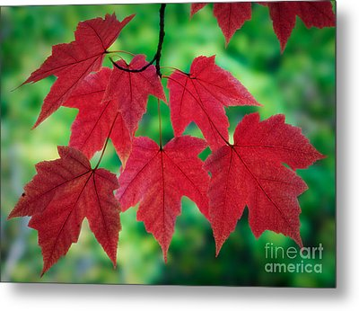 Red And Green Metal Print by Inge Johnsson