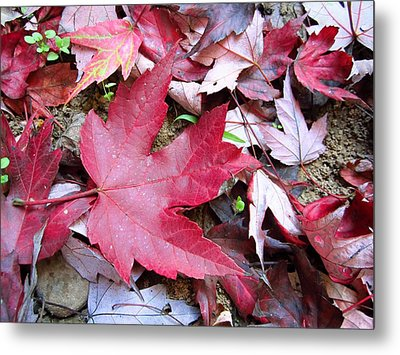 Red And Green Of Fall Metal Print