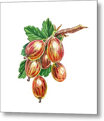 Red And Happy Gooseberries Metal Print by Irina Sztukowski