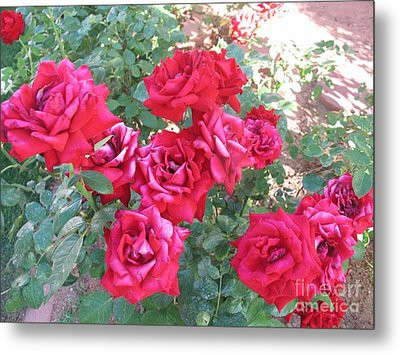 Metal Print featuring the photograph Red And Pink Roses by Chrisann Ellis