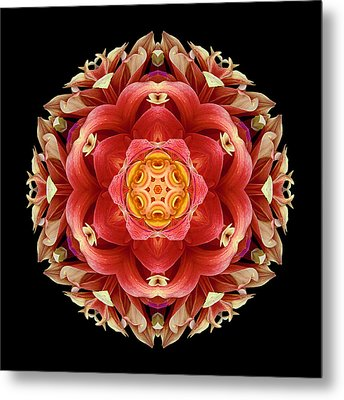 Red And Yellow Dahlia IIi Flower Mandala Metal Print by David J Bookbinder
