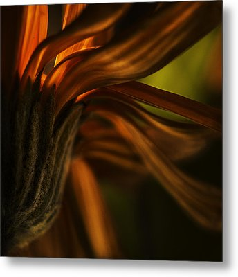 Metal Print featuring the photograph Red Autumn Blossom Detail by Peter v Quenter