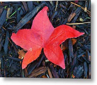 Red Autumn Leaf Metal Print