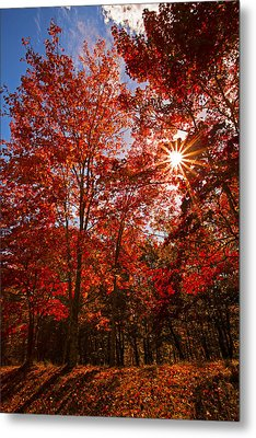 Metal Print featuring the photograph Red Autumn Leaves by Jerry Cowart
