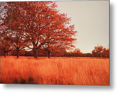 Red Autumn Metal Print by Violet Gray