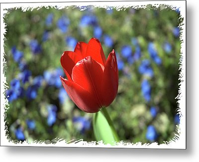 Red Baby Metal Print by Arthur Fix