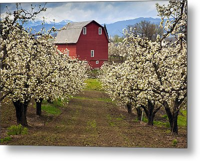 Red Barn Spring Metal Print by Mike  Dawson