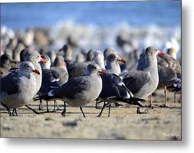 Red Beak Seagull Convention Metal Print