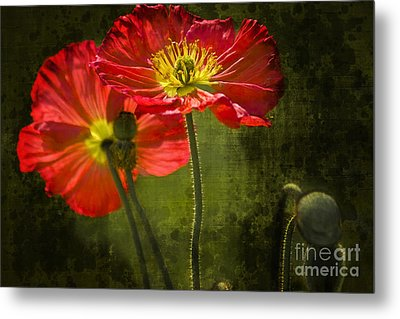 Red Beauties In The Field Metal Print by Heiko Koehrer-Wagner