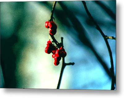 Red Berries On Canvas Metal Print by Cara Moulds