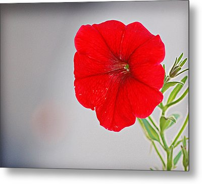 Metal Print featuring the photograph Red Blossom by Linda Brown
