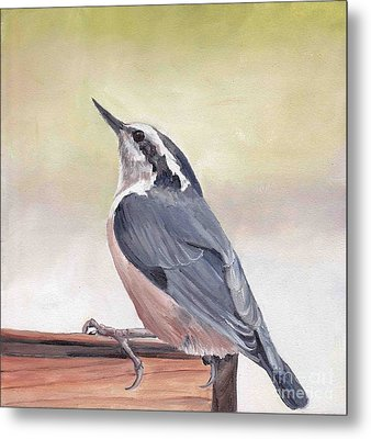 Red Breasted Nuthatch Metal Print by Charlotte Yealey