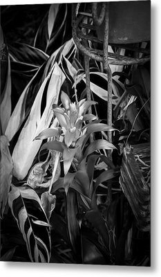 Red Bromeliad And Tricolor Gingers Bw Metal Print
