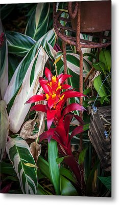 Red Bromeliad And Tricolor Gingers Metal Print