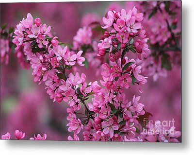 Red Bud Blossoms Metal Print by Theresa Willingham