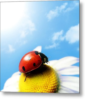 Red Bug On Camomile Flower Metal Print