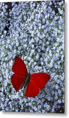 Red Butterfly And Baby's Breath Metal Print