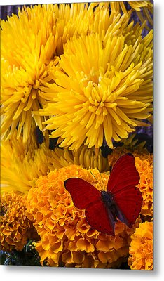 Red Butterfly On African Marigold Metal Print by Garry Gay