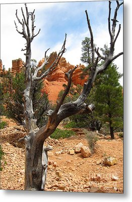 Red Canyon Tree And Rocks Metal Print