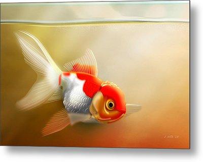 Red Cap Goldfish Metal Print