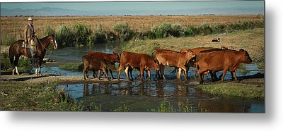 Red Cattle Metal Print by Diane Bohna