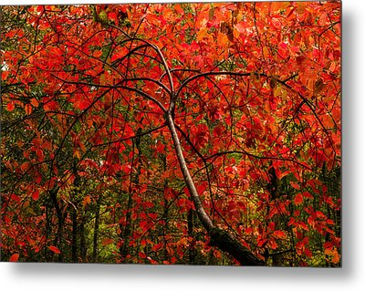 Red Metal Print by Chad Dutson