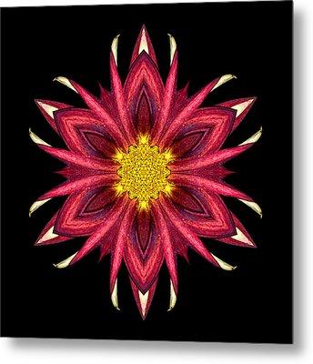 Red Chrysanthemum IIi Flower Mandala Metal Print