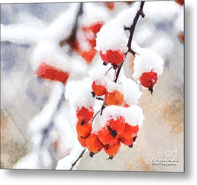 Red Crabapples In The Winter Snow - A Digital Painting By D Perry Lawrence Metal Print by David Perry Lawrence
