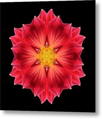 Red Dahlia Hybrid IIi Flower Mandala Metal Print