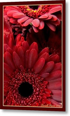 Red Daisies Metal Print by Danielle  Parent