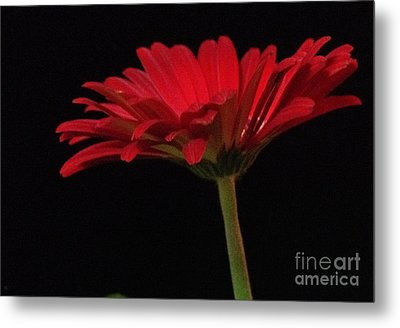 Red Daisy 2 Metal Print