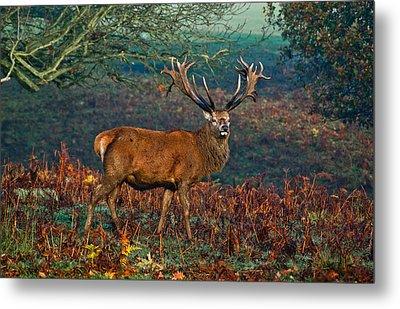Red Deer Stag In Woodland Metal Print