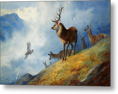Red Deer Watching A Golden Eagle Hunt Metal Print