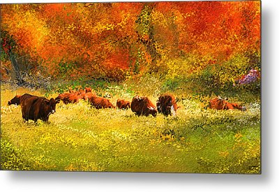 Red Devon Cattle In Autumn -cattle Grazing Metal Print