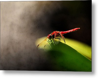 Red Dragonfly And Smoke Metal Print