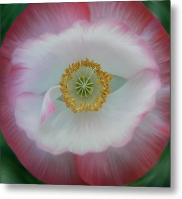 Metal Print featuring the photograph Red Eye Poppy by Barbara St Jean
