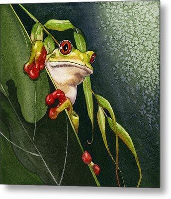 Red-eyed Frog Metal Print by Lyse Anthony