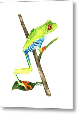 Red-eyed Treefrog From La Selva Metal Print by Cindy Hitchcock