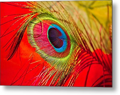 Red Feather Metal Print by Adria Trail