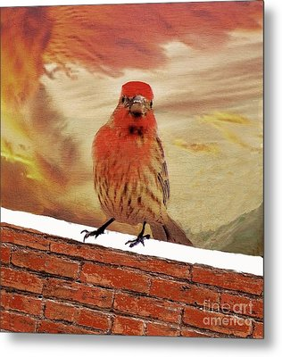 Red Finch On Red Brick Metal Print by Janette Boyd